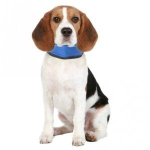 Nagelpflege für Haustiere