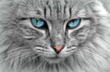 Katzenbedarf